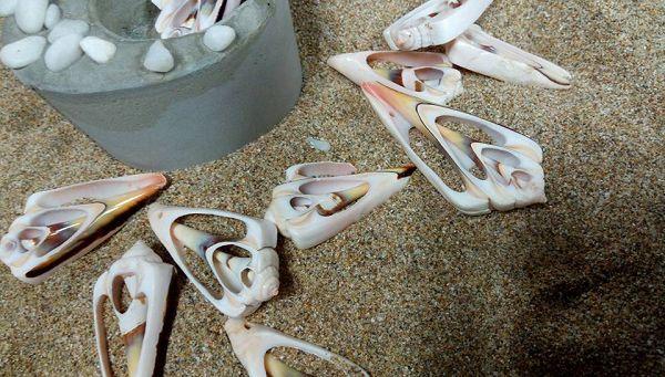 小貝殼-1   貝殼(9入)*1
